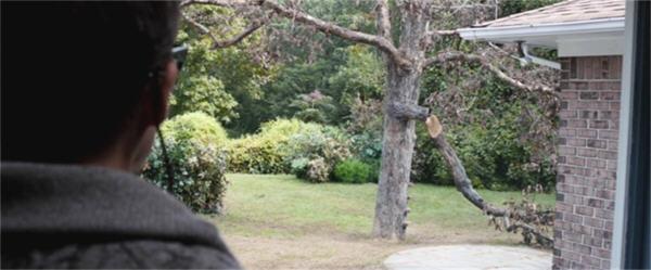 S12-tree1b