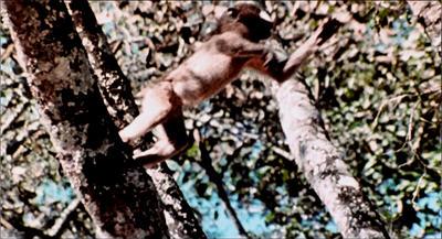 HOTLD80-monkey1b