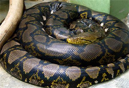 MITZ33-python1b