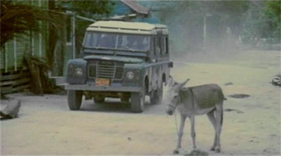 ZH80-donkey1b