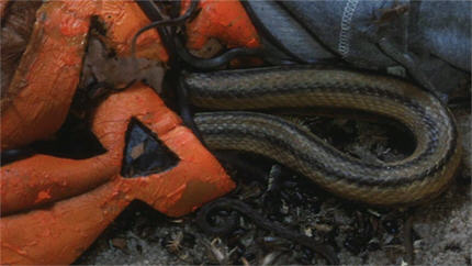 HTSOTW82-snake1b