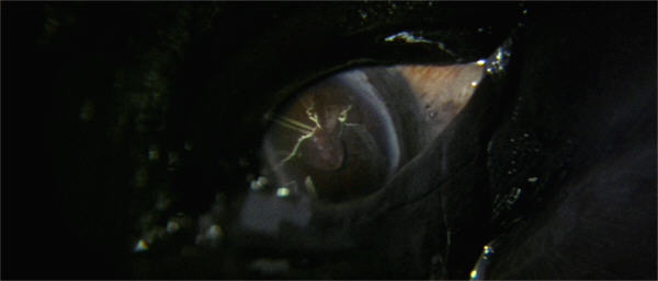 O77-eye3b