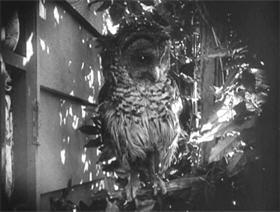 tac14-owl1b